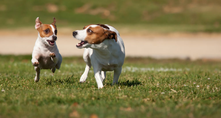 Dogs on Grass © Feverpitched | Dreamstime 15829115