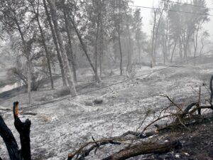 Almeda Fire, Oregon