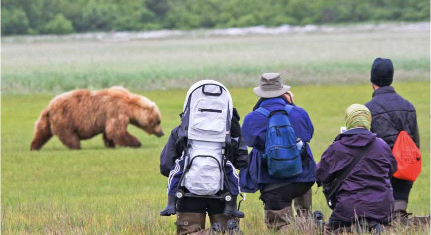 Alaska brown bear viewing at Hallo Bay