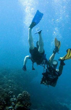 Divers exploring a reef off Bora Bora