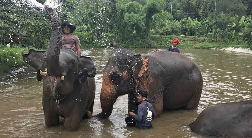 Elephants and their handlers enjoying the water