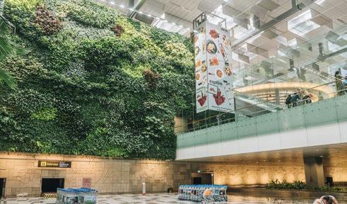 Singapore Changi Airport's Green Wall