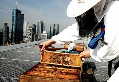 Beekeeper at Jumeirah Frankfurt © JUMEIRAH