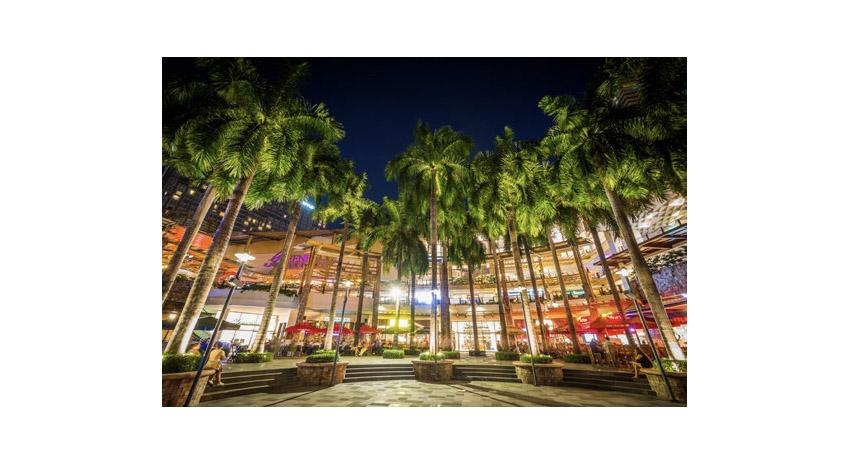 Makati palm trees © JON BILOUS   DREAMSTIME.COM