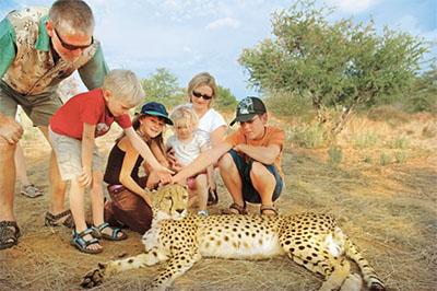 Family at a Zambia cheetah encounter