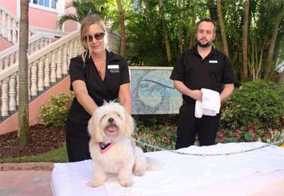 Loews Don CeSar Hotel's Pampered Pet massage