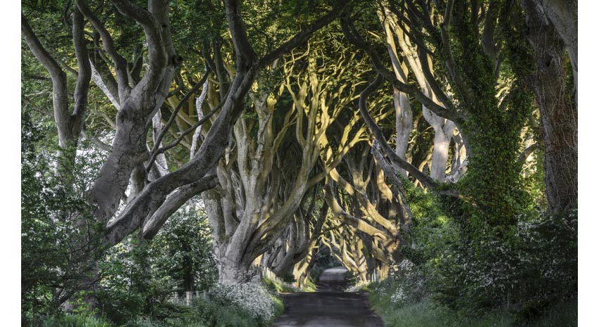The Dark Hedges in Co. Antrim, Northern Ireland, appeared in Game of Thrones © JACEK KADAJ | DREAMSTIME