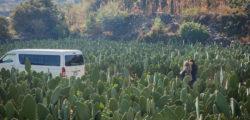 Eat Mexico cactus farm tour © ANA TELLO / EAT MEXICO