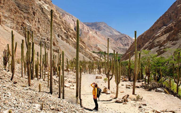 Tourist in the Peruvian high Andes © Rafał Cichawa | Dreamstime.com