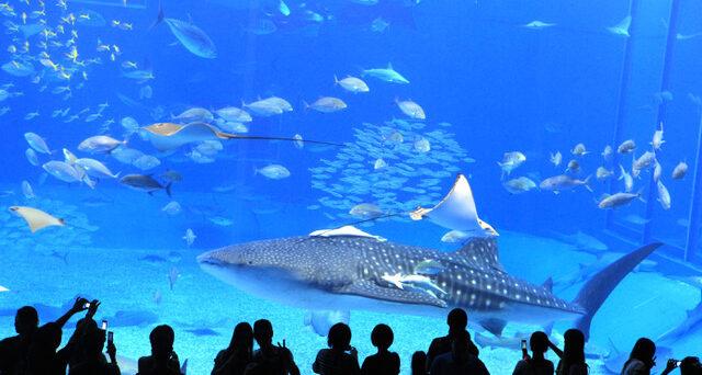 Okinawa Churami Aquarium