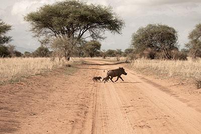 © Aloito Africa